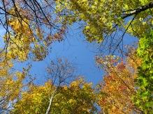 Autumn Leaves Park Mont-Royal