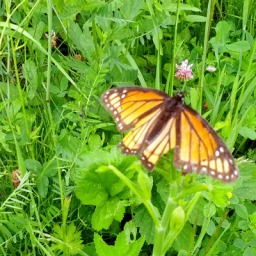 Butterfly Over Lush Meadow