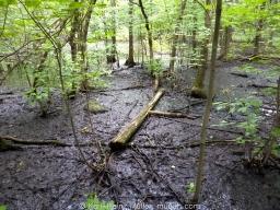 Forest L'île des Sœurs