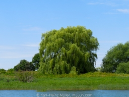 Large Light Green Tree in front of Dark Green Tree