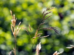Grass in front of blurry background
