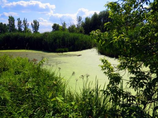 Lake inside Parc-nature de la Pointe-aux-Prairies