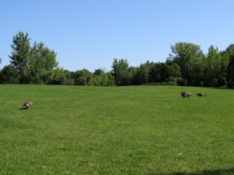 Parc Michel-Chartrand near Les Trois Lacs