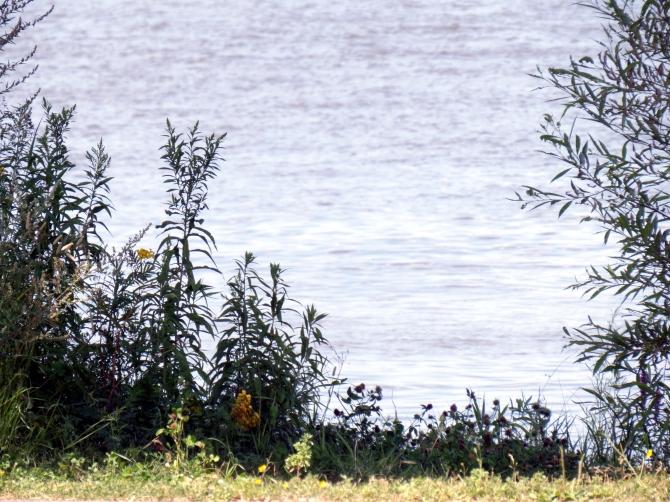 Bout de l'Île Nearby River