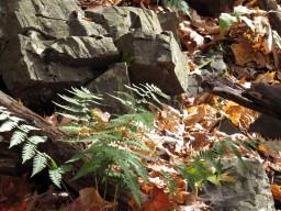 Rocks and Foliage