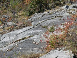 Rocks and Foliage