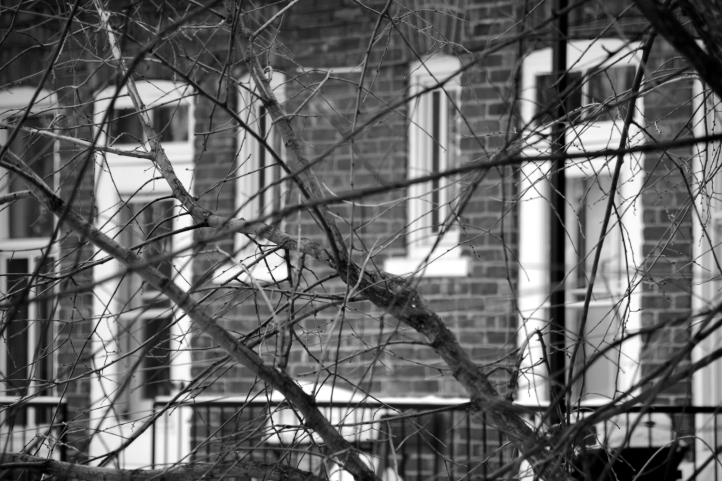 Backyard Montreal