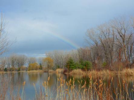 Angrignon Park - Rainbow