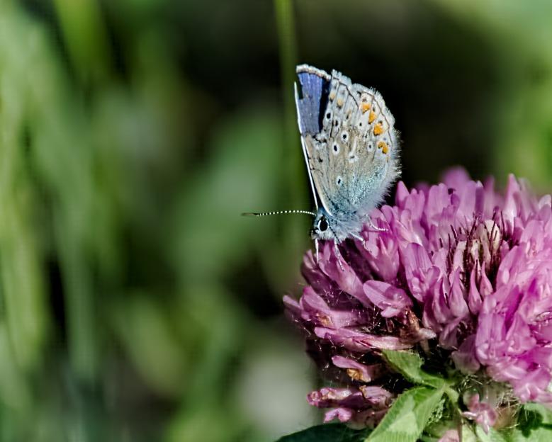 Broken Wing - Butterfly on Flower