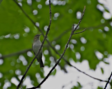 A bird without name, yet