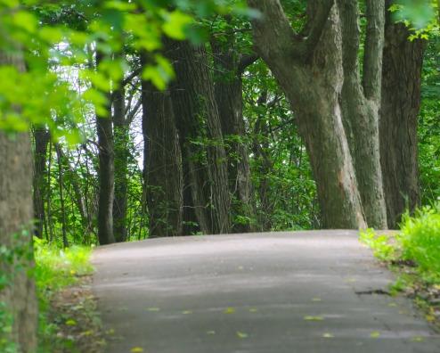 Pathway Park Mont-Royal