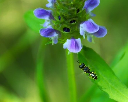Blue Flower with Visitor