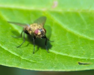 Close Up Fly
