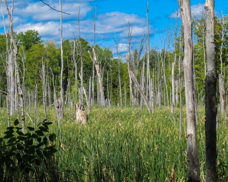 Swamp inside Park Ile Bizard