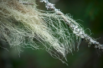 Lichen Captured at Tadoussac Tadoussac on 22 May 2018 by Karl-Heinz Müller, Fauna & Flora Photography, muuuh.com